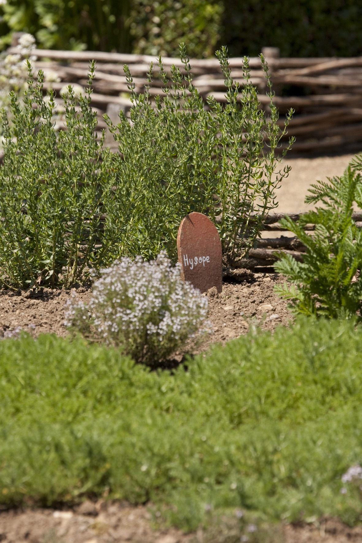 Plantes Jardin médiéval de Bazoges-en-Pareds